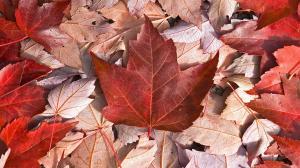 Canadian-Fall-VanDusen-Gardens-Vancouver-British-Columbia